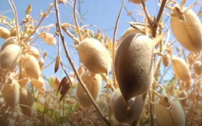 Agtrace es un programa que advierte si los LMR de fitosanitarios pueden ser elevados, en función de estándares internacionales de calidad.