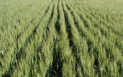 AgTrace: Un sistema informático advierte si los LMR de fitosanitarios son elevados según estándares internacionales de calidad.