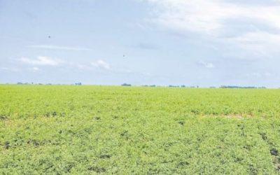 Nueva herramienta para la trazabilidad de granos – Super Campo