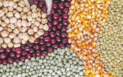 ¿Cómo Canadá maneja los Límites Máximos de Residuos (LMR) en la producción de legumbres?