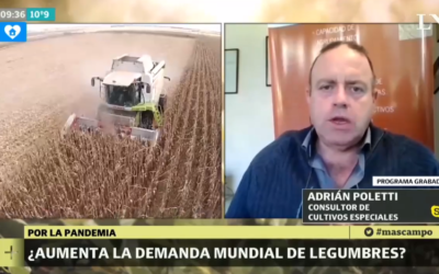 ¿Aumenta la demanda mundial de legumbres?