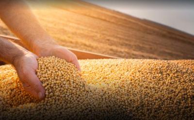 China aprueba una soja transgénica para su importación desde Argentina